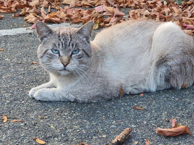Nos chats à l'adoption 4f802d10