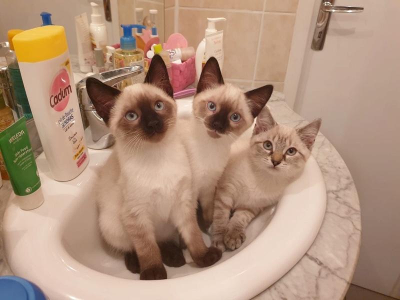 Photos des chats sauvés, avant/après - Page 10 52414f10