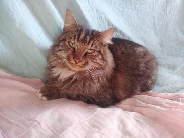 Nos chats à l'adoption 6061a810