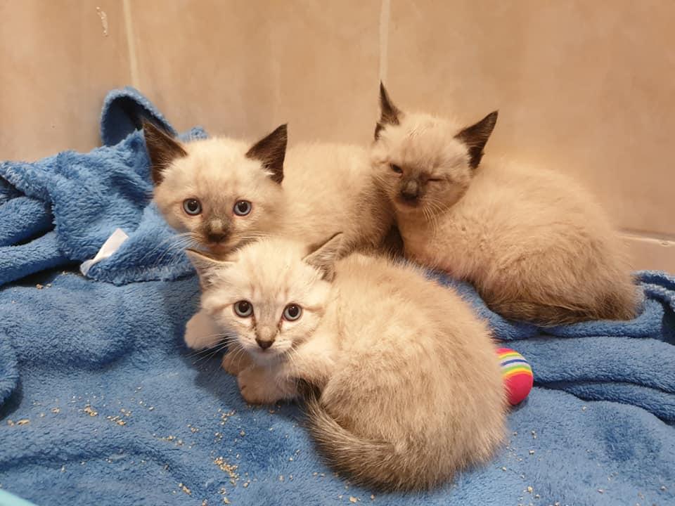 Photos des chats sauvés, avant/après - Page 10 61780410