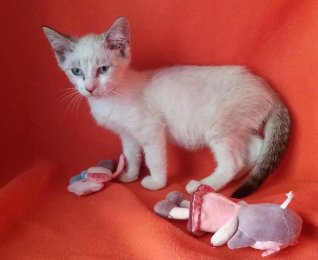 Nos chats à l'adoption 65482510