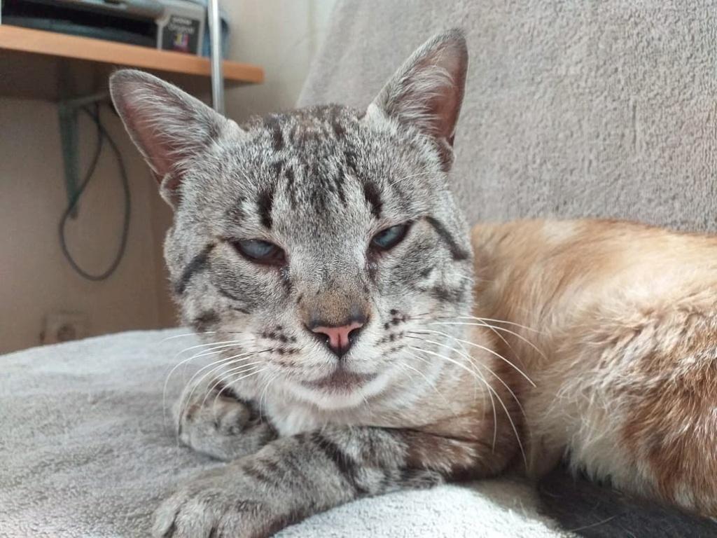 Nos chats à l'adoption 67401810