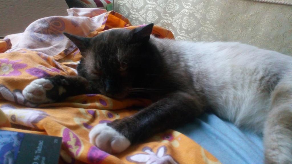 Nos chats à l'adoption 67731010