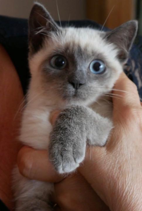 Nos chats à l'adoption 67819710