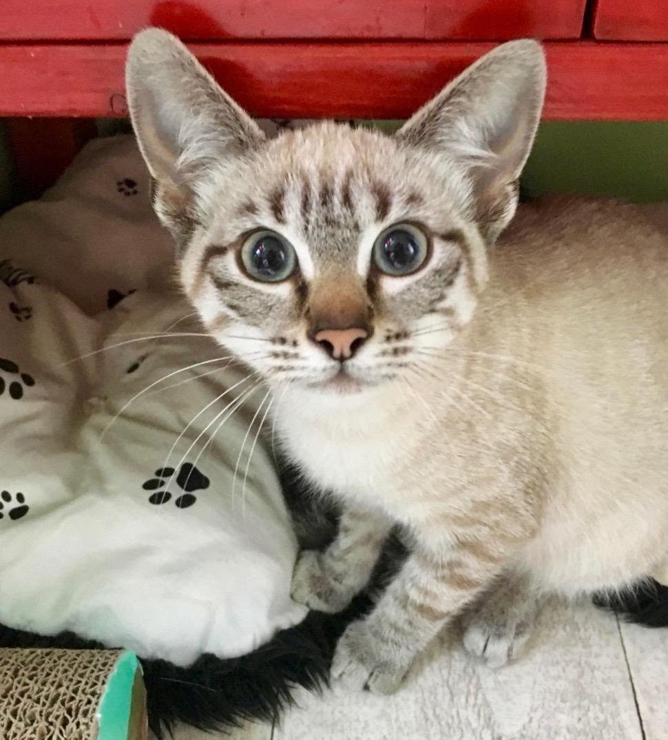 Nos chats à l'adoption 67981911