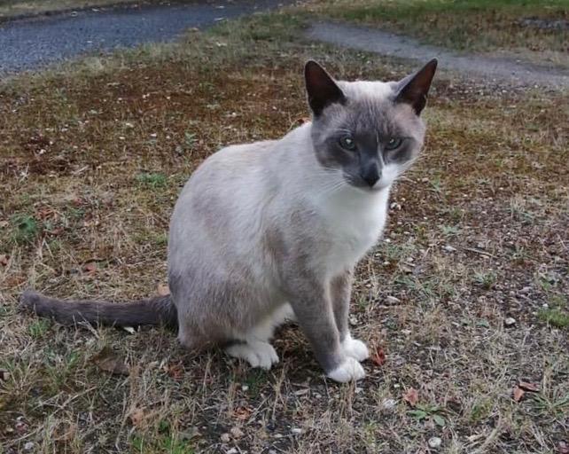 Nos chats à l'adoption 69416710