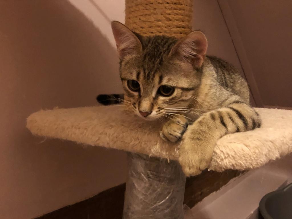 Nos chats à l'adoption 6f2e0210