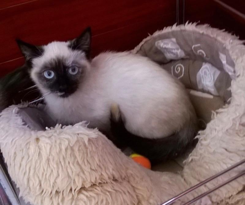 Nos chats à l'adoption 71d12c11