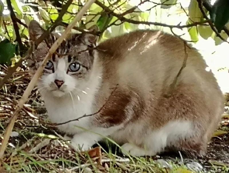 Nos chats à l'adoption 72126810