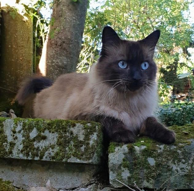Nos chats à l'adoption 72730210