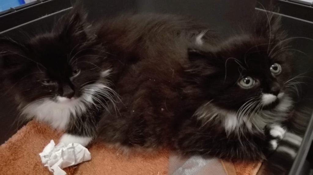 Nos chats à l'adoption 75233710