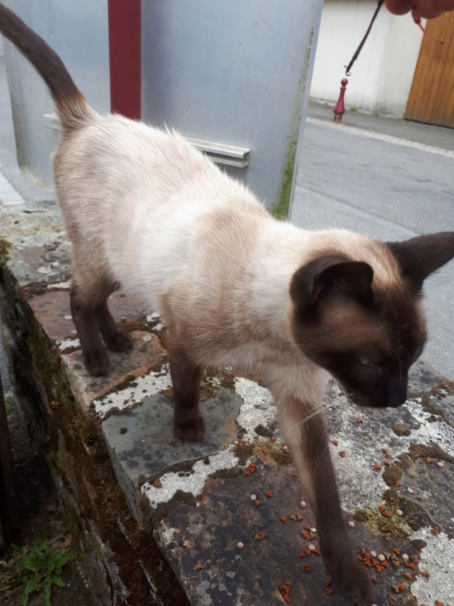 Nos chats à l'adoption 78721411
