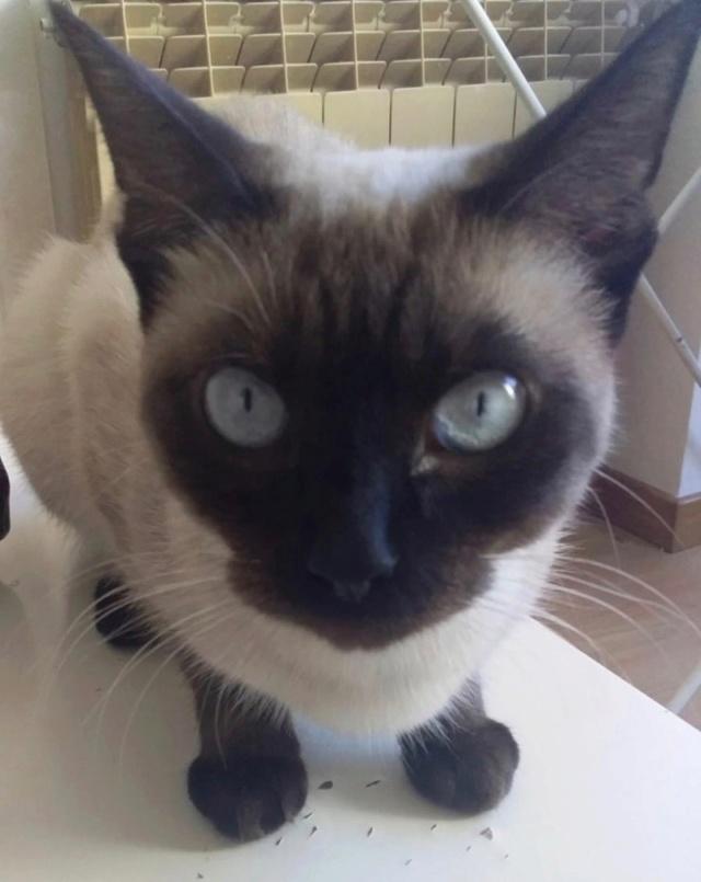 Nos chats à l'adoption 81181712