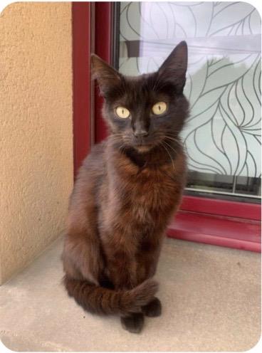 Nos chats à l'adoption 8277ce10