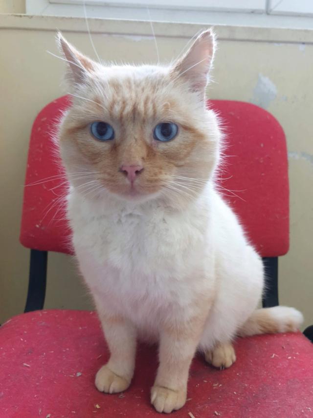 Nos chats à l'adoption 91dfe310