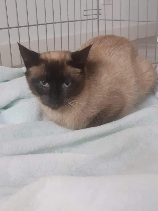 Nos chats à l'adoption 937b5f10