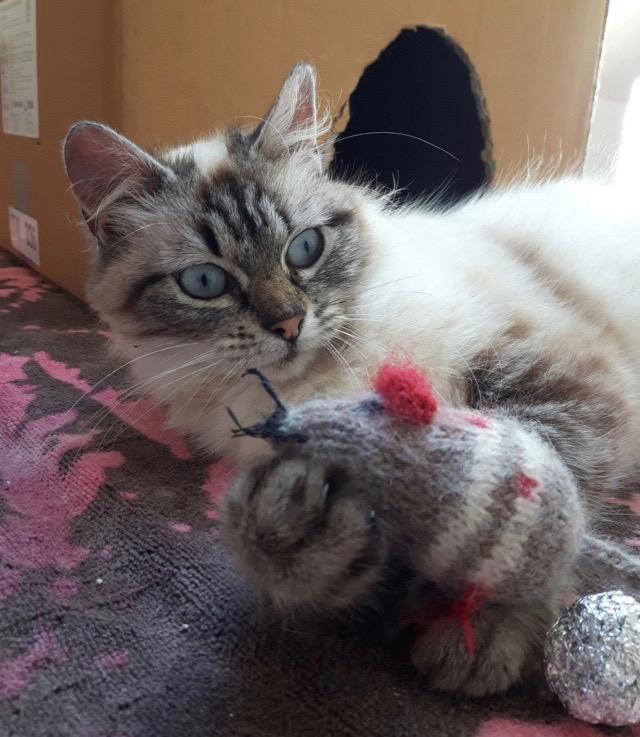 Nos chats à l'adoption 98359510
