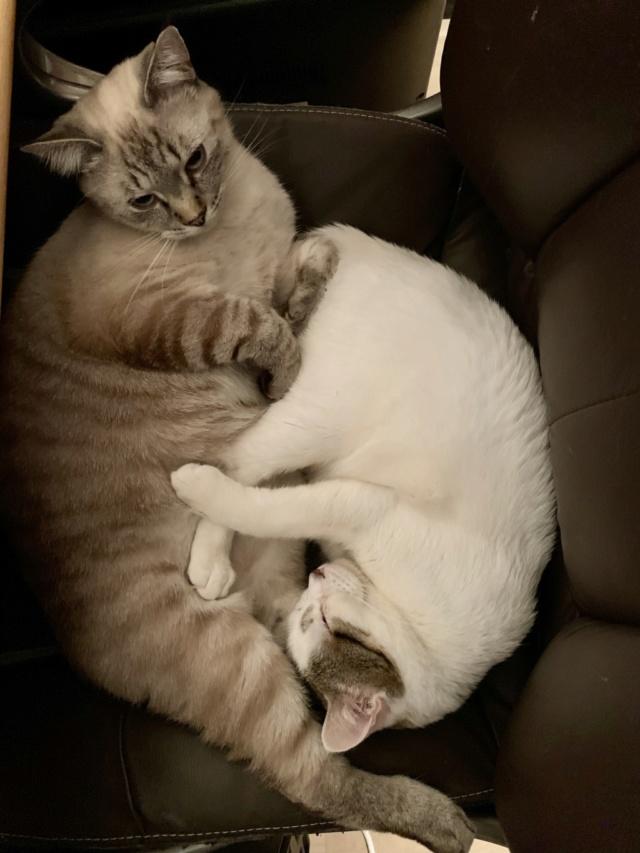 Nos chats à l'adoption 9a4e7110