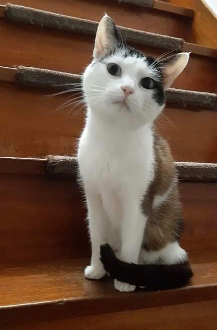 Nos chats à l'adoption 9c471310