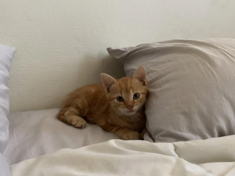 Nos chats à l'adoption A7e5b610