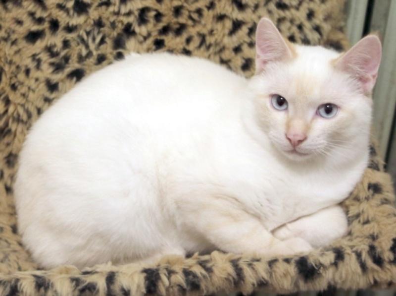 Nos chats à l'adoption Al_et_10