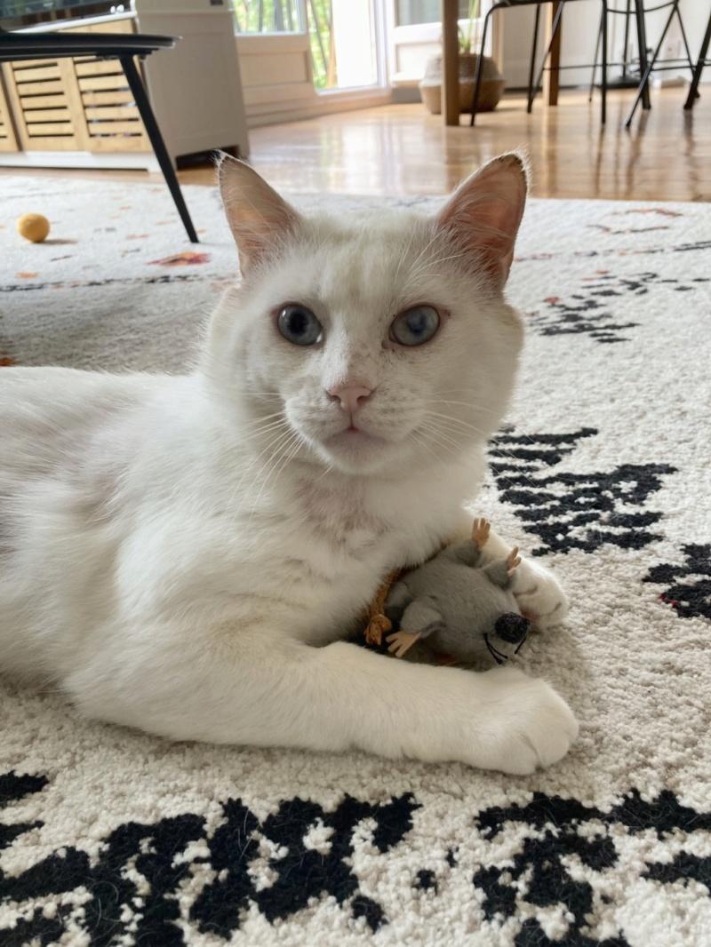 Nos chats à l'adoption B2e61f10