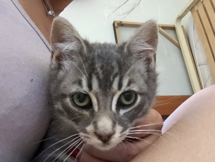 Nos chats à l'adoption Bb2_ti10