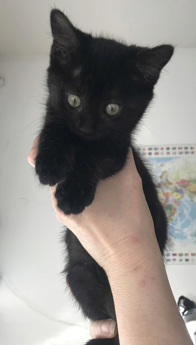 Nos chats à l'adoption Brook110
