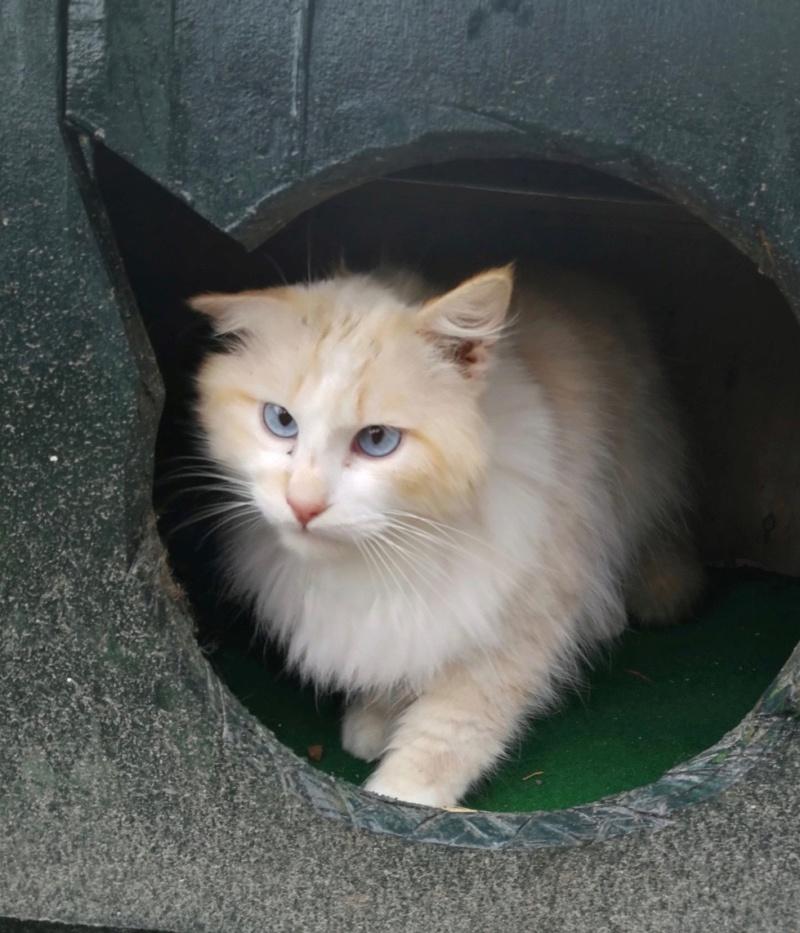 Nos chats à l'adoption C65a7711