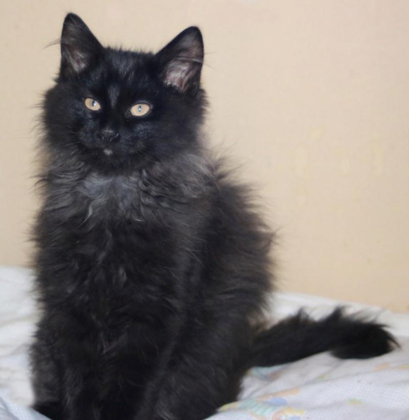 Nos chats à l'adoption Copi1011