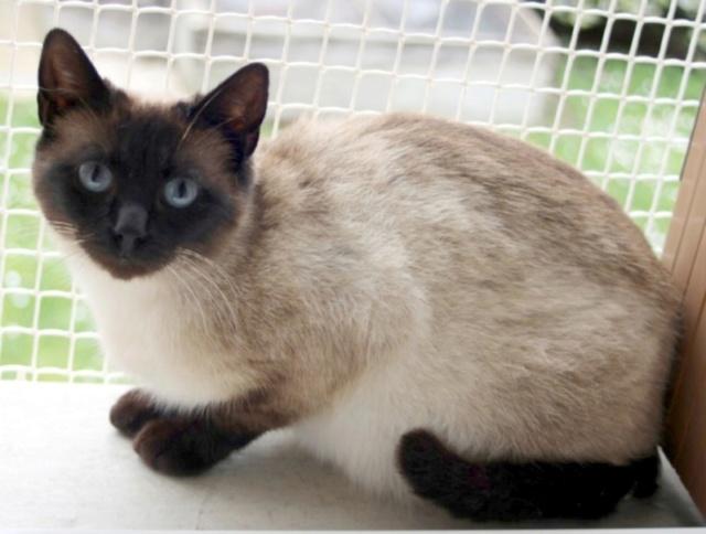 Nos chats à l'adoption Copi1110