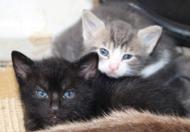 Nos chats à l'adoption Copi1217