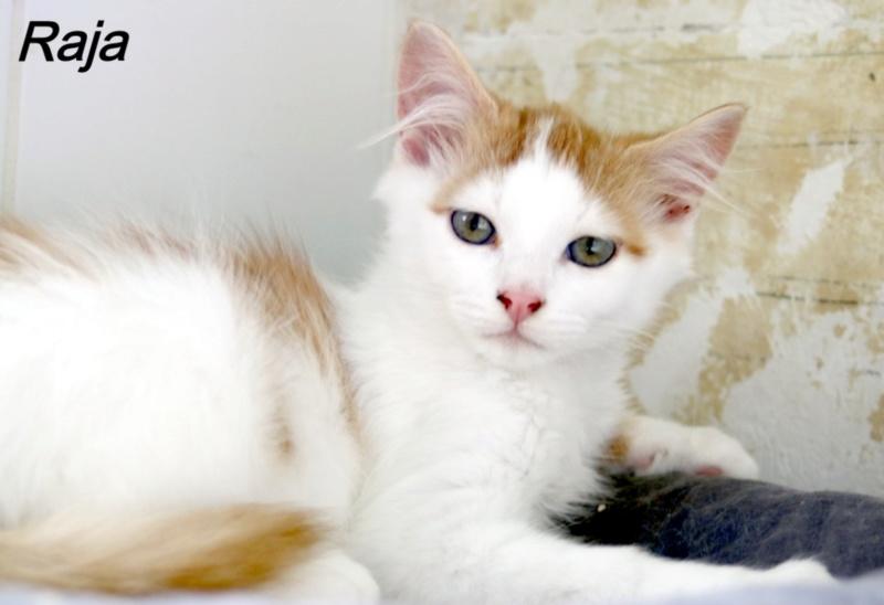 Nos chats à l'adoption Copi1410