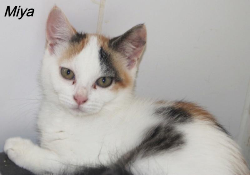 Nos chats à l'adoption Copi1411