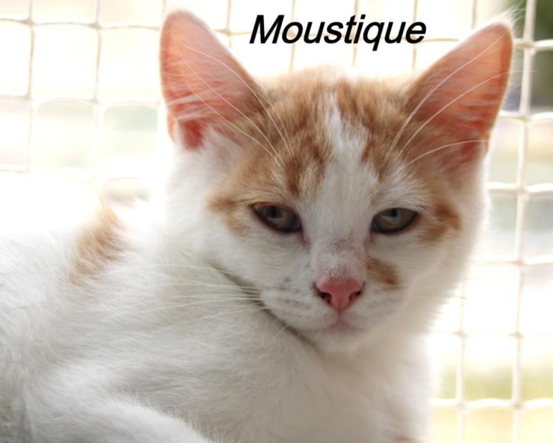 Nos chats à l'adoption Copi1414