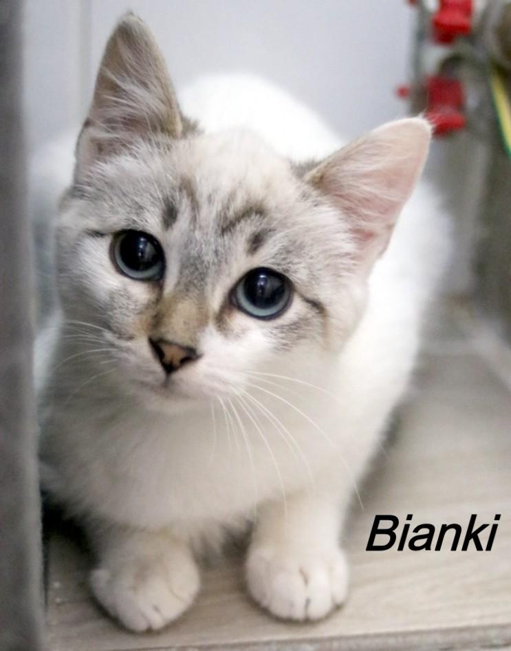 Nos chats à l'adoption Copi1611
