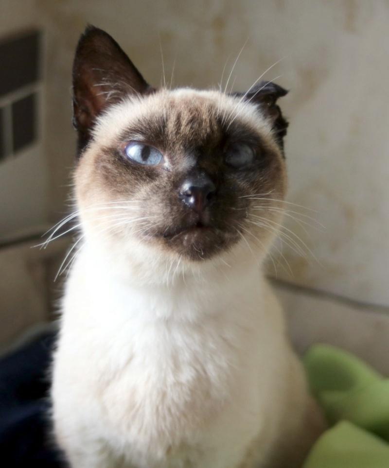 Nos chats à l'adoption Copi1710