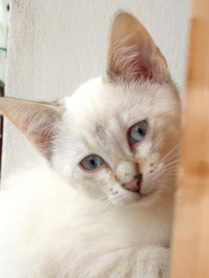 Nos chats à l'adoption Copie712