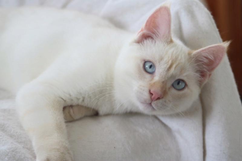 Nos chats à l'adoption Copie910