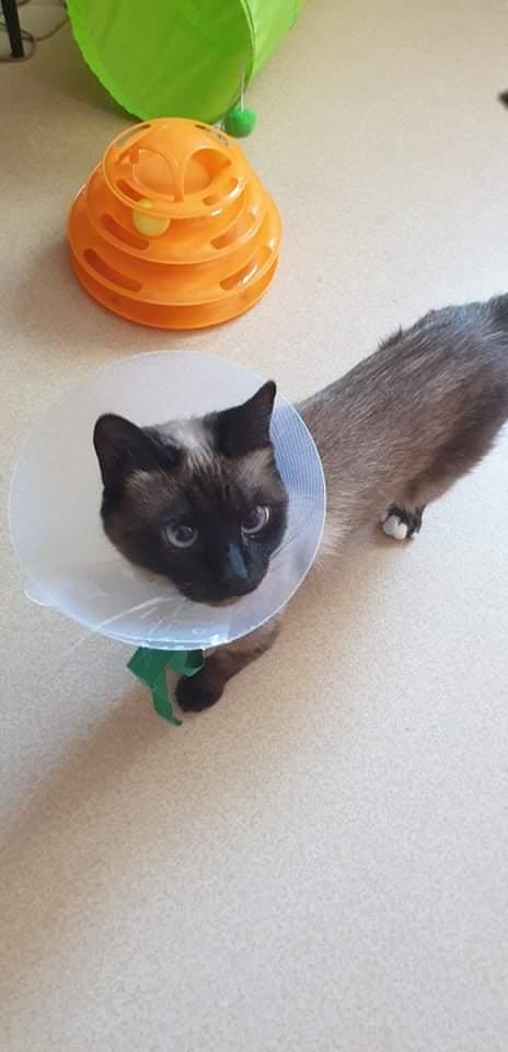 Nos chats à l'adoption Dad8e310