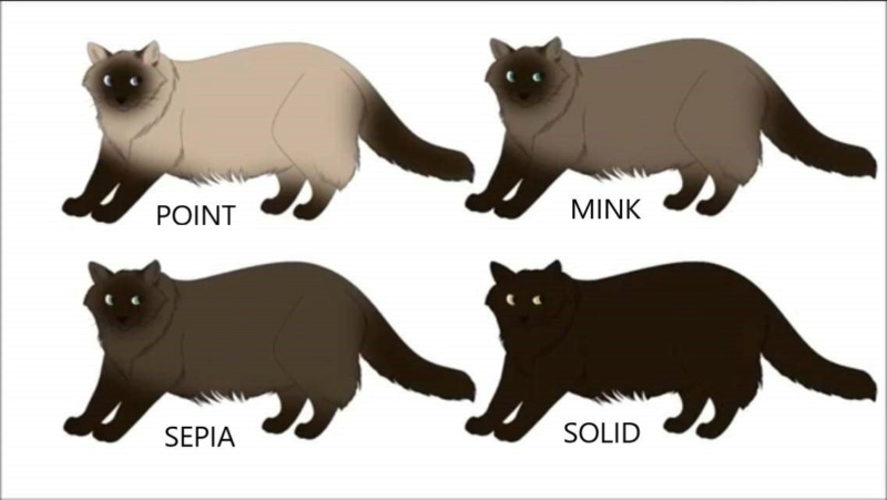 La robe du chat illustrée - Page 2 Fb_img10
