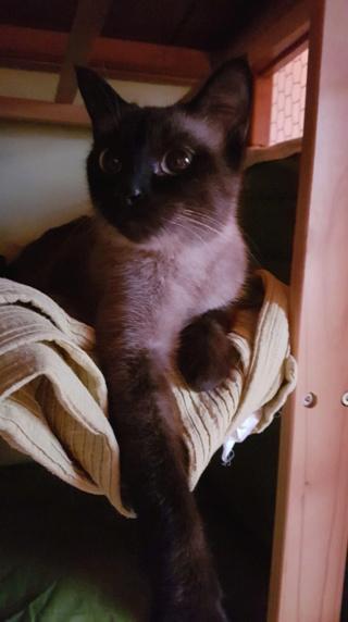 Nos chats à l'adoption Fe45d010