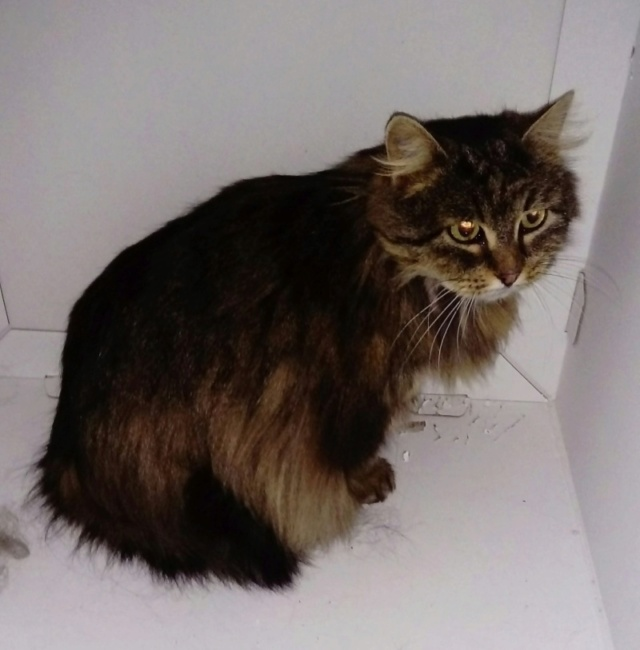 Nos chats à l'adoption Freya10