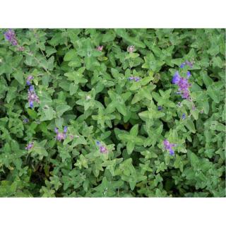 Acharnement sur les plantes : besoin d'herbe à chat ?  Graine11