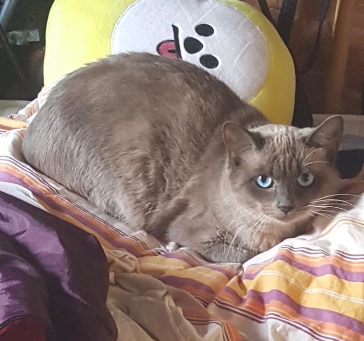 Nos chats à l'adoption Img-2010