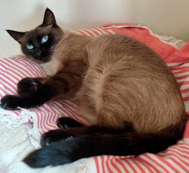 Nos chats à l'adoption Img20212