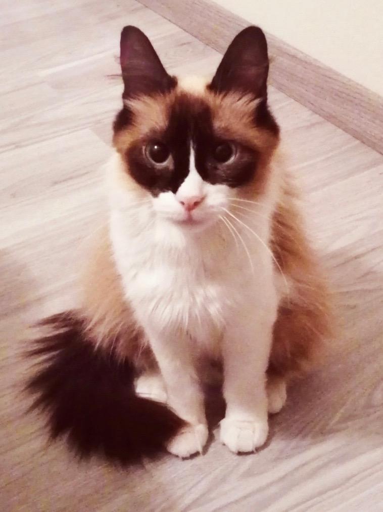 Nos chats à l'adoption Img_2023