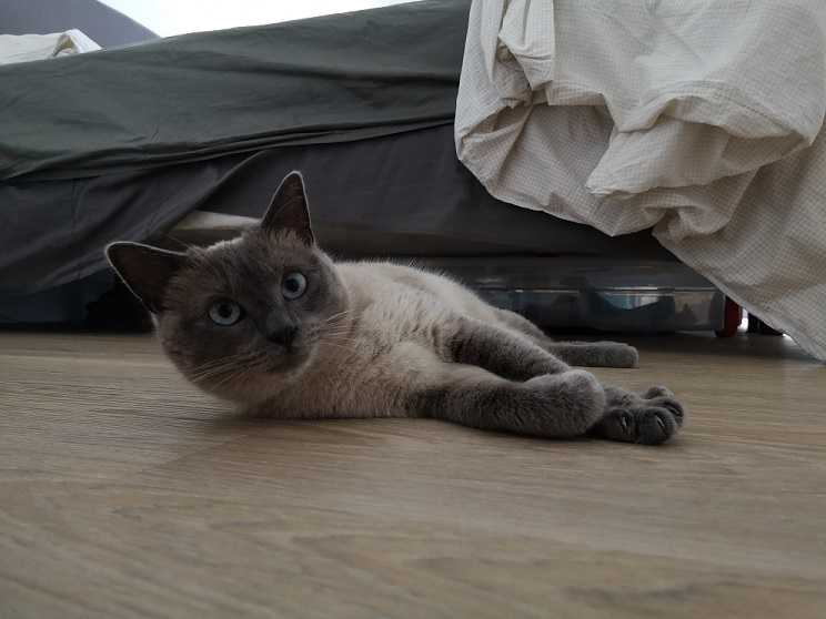 Nos chats à l'adoption Img_2028