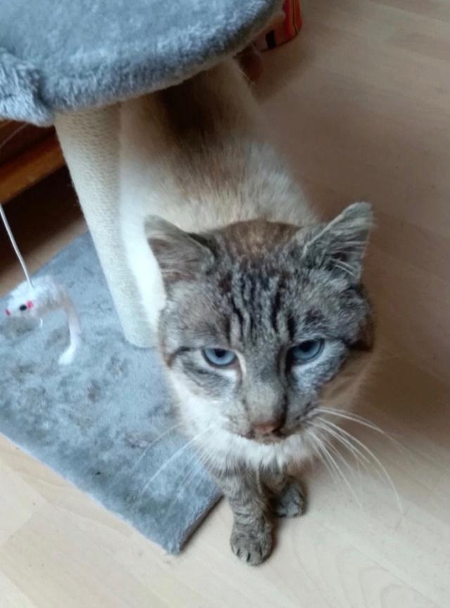 Nos chats à l'adoption Img_2029