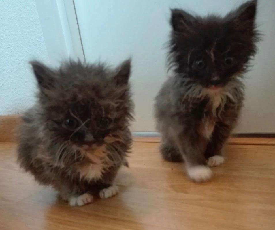 Nos chats à l'adoption Img_2030